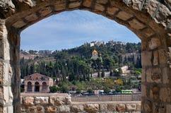 Montierung der Oliven. stockbild