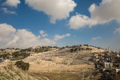 Montierung der Oliven in Jerusalem Stockbild