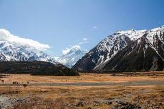 Montierungs-Koch Neuseeland Stockfotografie