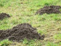 Montinho de terra três em um prado Imagem de Stock Royalty Free