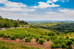 Montmelas castle and vineyards, Beaujolais, France Stock Photos