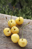 Montmorency yellow cherries Royalty Free Stock Photography