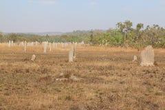 Montón de la termita Imagen de archivo