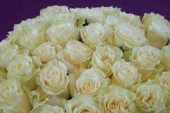 Montão das rosas Imagem de Stock