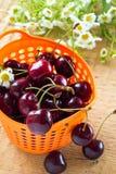 Montão de cerejas doces na cesta Fotografia de Stock Royalty Free