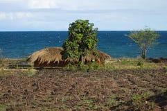 Montones de la granja de la agricultura - Malawi fotos de archivo