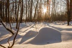 Montones de la nieve Dunas eróticas de la nieve en el bosque nevoso ucraniano que iguala con la luz caliente suave de la puesta d Imagen de archivo libre de regalías