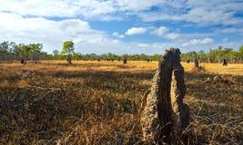 Montones de la termita Foto de archivo libre de regalías