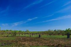 Montones de la termita en el parque nacional de Litchfield Fotos de archivo