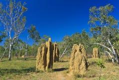 Montones grandes de la termita de la catedral Imagen de archivo