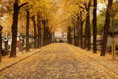 Montparnasse Cemetery Paris. Montparnasse Cemetery in Paris. Boulevard covered with autumnal leaves stock photo