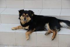montre de chien noir de la maison ayant un ami de queue Photos libres de droits
