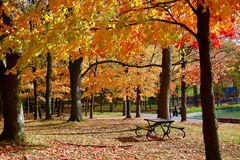 Montreal, Autumn, Quebec Canada Royalty Free Stock Images