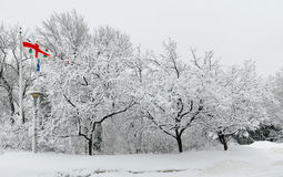 Montreal City Flag with Snow Covered Trees Stock Photography