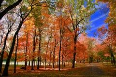 Montreal, de Herfst, Quebec Canada Stock Foto's