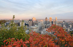 Montreal de stad in stock afbeeldingen