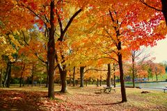 Montreal höst, Quebec Kanada Royaltyfri Fotografi