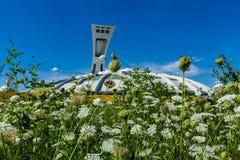 Montreal Olimpijski stadium jak widzieć od wiązki hogweed kwiaty za fotografia royalty free