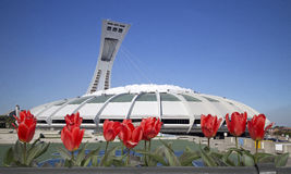 Montreal olympic stadium. With red tulips on front Royalty Free Stock Photo