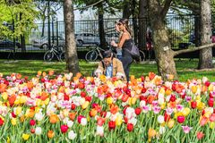 MONTREAL, QUEBEC, CANADA - MAY 21, 2018: People at park. Locals and tourists in Montreal flower park garden zone. royalty free stock photo