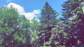 Montreal& x27; s自然 库存照片