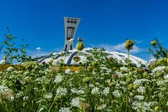 Montreal's Olympic Stadium as seen from behind a bunch of hogweed flowers royalty free stock photography