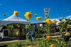 Montreal's Olympic Stadium as seen from behind a row of yellow flowers royalty free stock photo