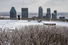 Montreal skyline in winter. With bushes covered with ice stock image