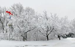 Montreal stadsflagga med dolda träd för snö Arkivbild