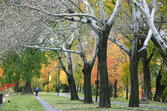 Montreal w Jesień Fotografia Royalty Free