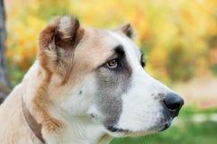 Montres rouges de chien Photos libres de droits