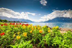 Montreux city with Swiss Alps, lake Geneva and vineyard on Lavaux region, Canton Vaud, Switzerland, Europe.  royalty free stock photo