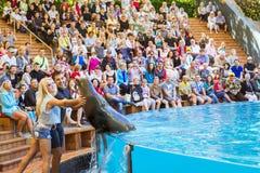 Montrez avec des dauphins dans la piscine, parque de Loro, Ténérife Images libres de droits