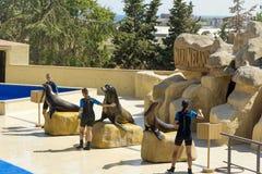 Montrez avec Marine Seals dans Marineland, Espagne Image libre de droits