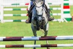 Montrez la tête sautante de plan rapproché de cheval dessus Photo stock