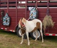 Montrez le poney Photo libre de droits