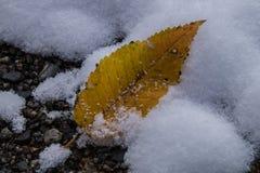 Montroc, Chamonix, la Savoie haute, France Images stock