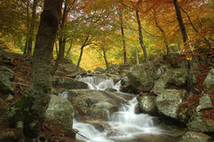 Montseny river. Little river in Montseny natural park Royalty Free Stock Photography