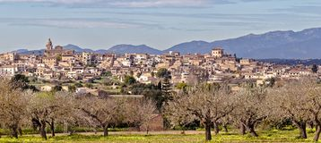 Old spanish town of Montuiri with blossoming trees and tramountana mountains, mallorca, spain royalty free stock image