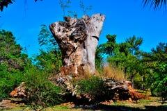 Monument av förstörelse Royaltyfri Foto