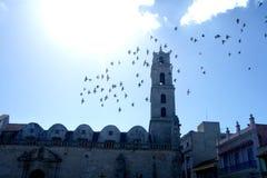 Monument Cuba de ville d'oiseaux de vol Image stock