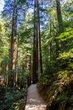 Monument de Muir Woods National Photos stock