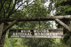 Monument de Muir Woods National en Californie Image stock
