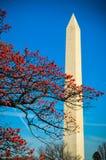 Monument de Washington par un arbre Photographie stock libre de droits