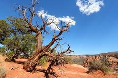 Monument national du Colorado Photos stock