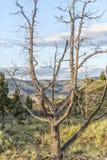 Monument peint de John Day Fossil Beds National de collines, Orégon Photo stock