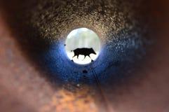 Monument sauvage de porc chez naturepark de hoge Veluwe Photographie stock