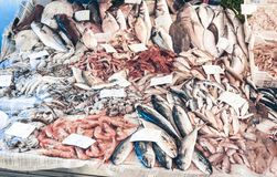 Fresh fish and seafood for sale in the fish market of Catania, Sicily, Italy.  stock photos