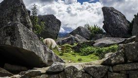 Monument sur Cusco Images libres de droits