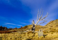 Monument to a careless trekker. A burned down tree called the Monument to a careless trekker near El Chalten, Argentina royalty free stock images